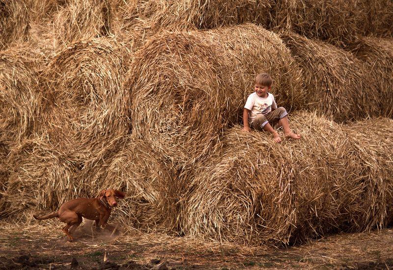 лето солнце желтый сено закат собака игра дружба счастье ребенок 85мм Счастливая пора...photo preview