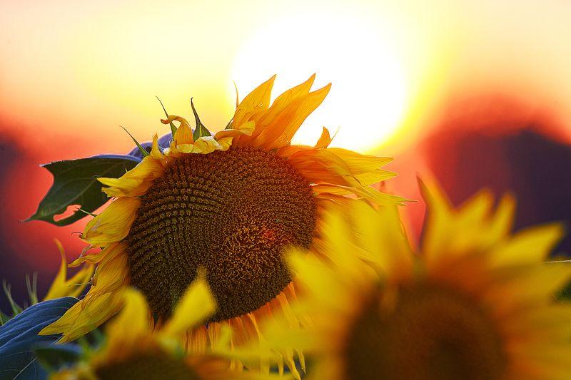 Про солнце.photo preview