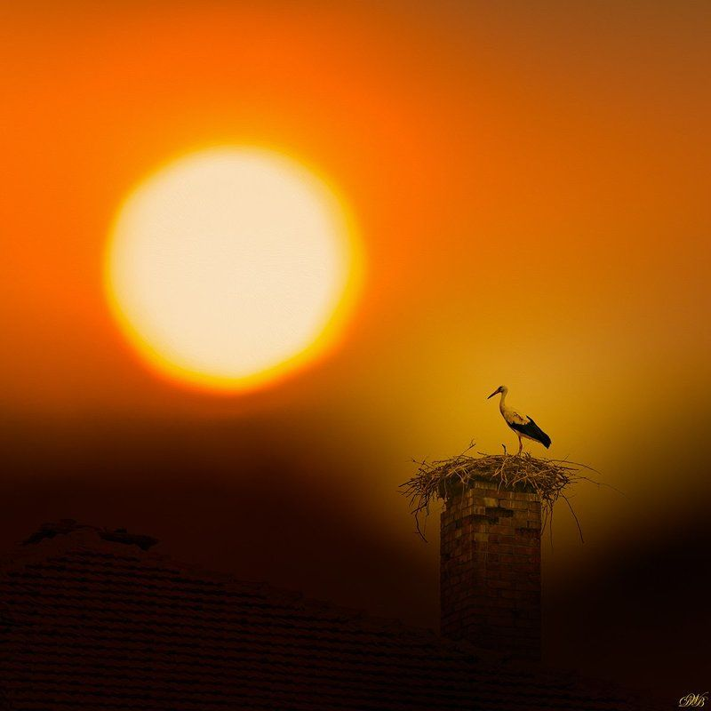 color, color image, colorful, collage, glow, image, light, nature, natural light, photo collage, photography, red, sun, sunset, Stork Witnessing the Sunsetphoto preview