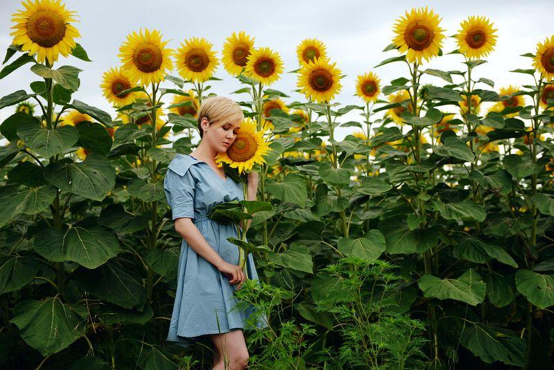 Девушка, поле, подсолнухи, подсолнух Музыкальнаяphoto preview