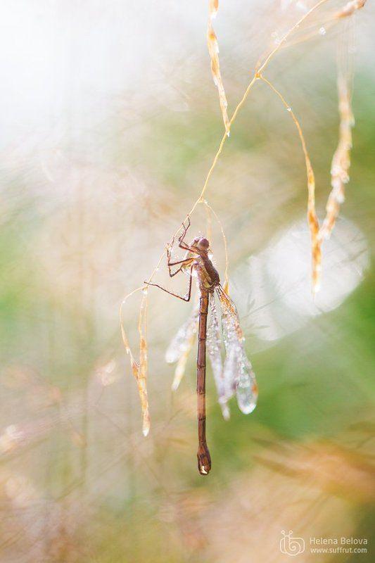 Раннее утро на стрекозьем озереphoto preview