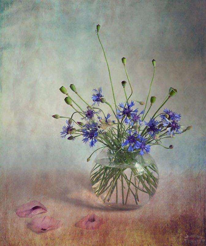Cztery pory roku - Latophoto preview
