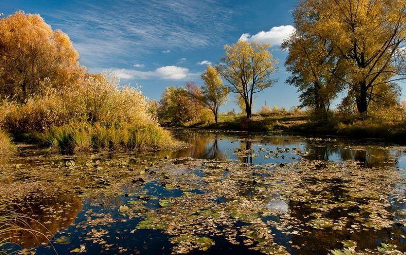 Осенние краскиphoto preview