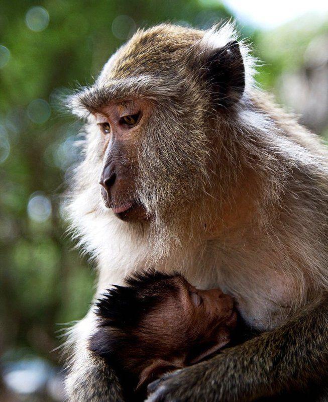Материнская любовьphoto preview