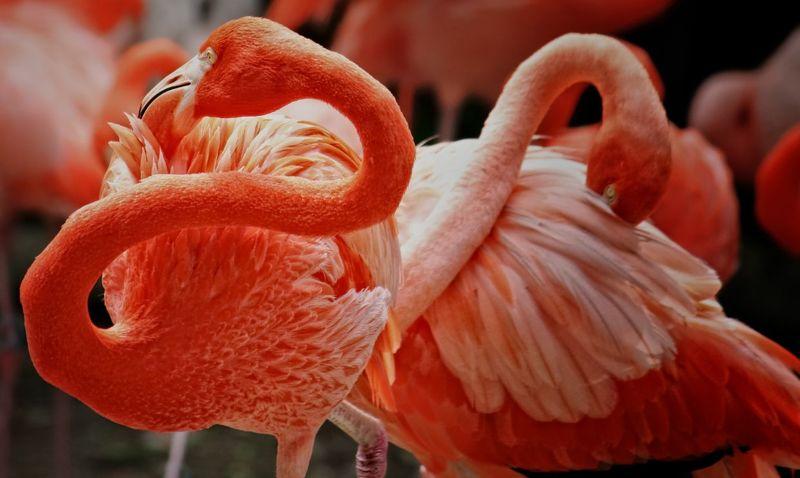 Фламингоphoto preview