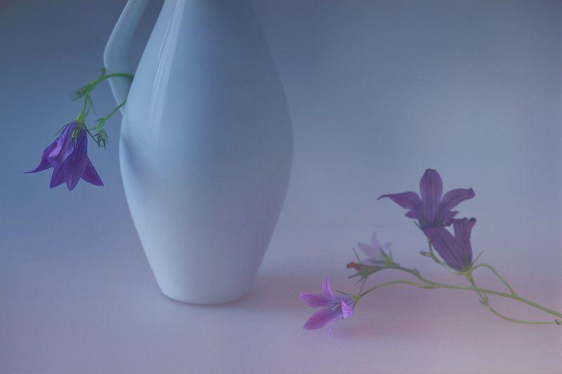 колокольчики, фото, натюрморт, цветы Колокольчикиphoto preview
