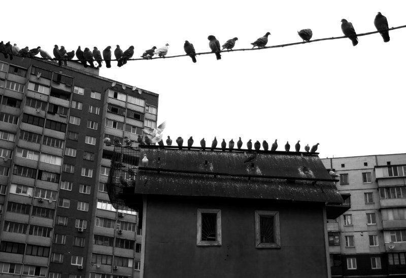 жилые кварталыphoto preview