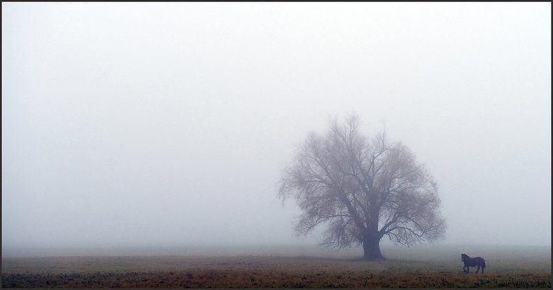 Autumn melancholyphoto preview