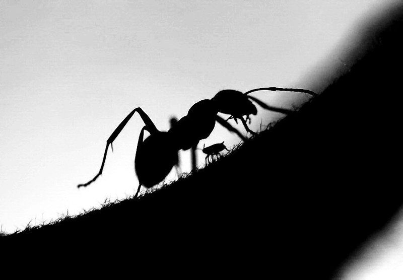 Театр теней (тля и муравей)photo preview