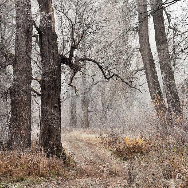 осень,, заморозки, туман, ноябрь photo preview