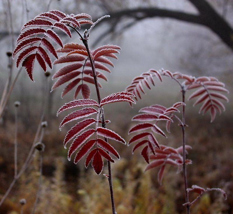 растения, иней Заморозкиphoto preview