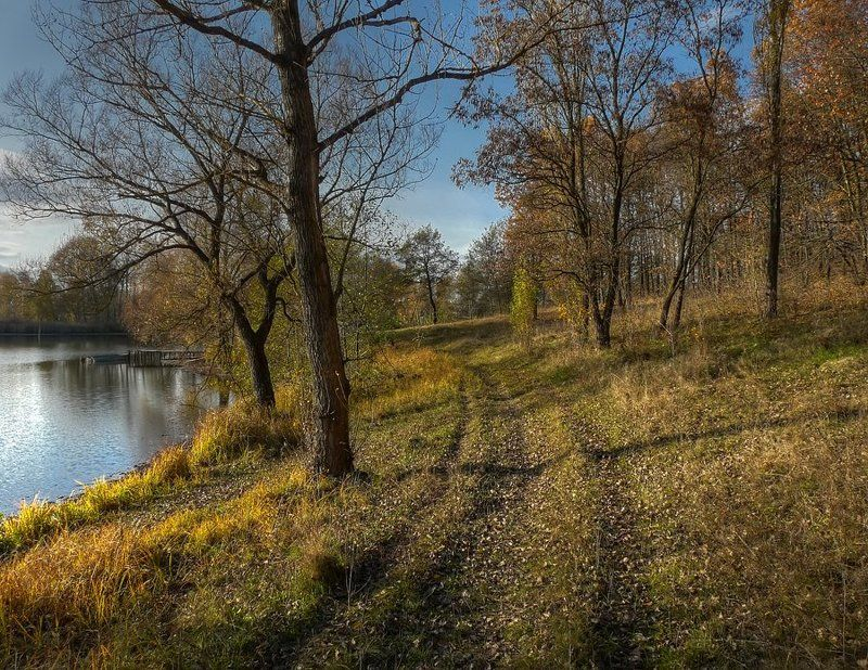 пейзаж, дорога, деревья, пруд photo preview