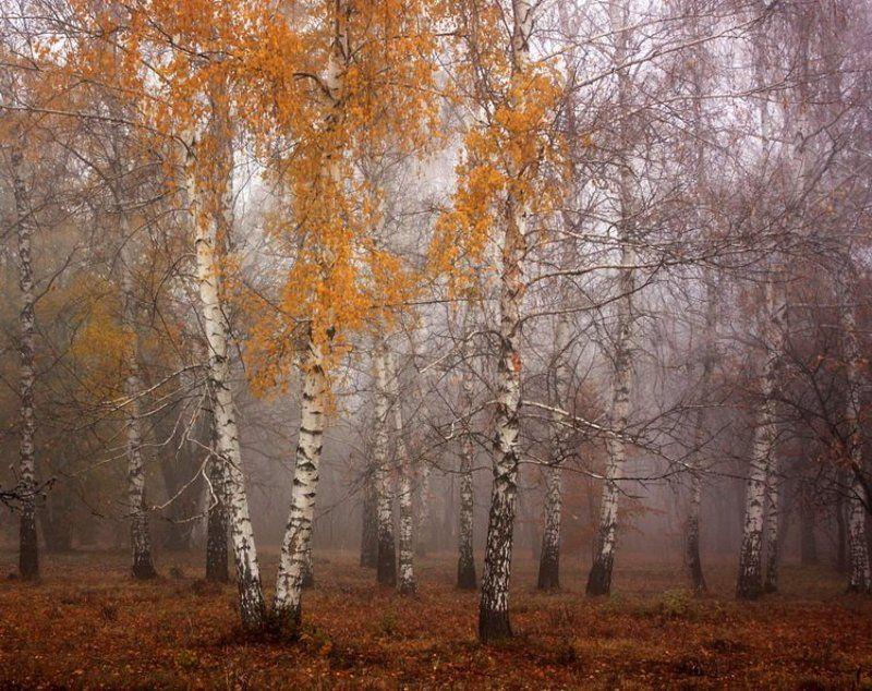 осень, ноябрь Ноябрь.photo preview