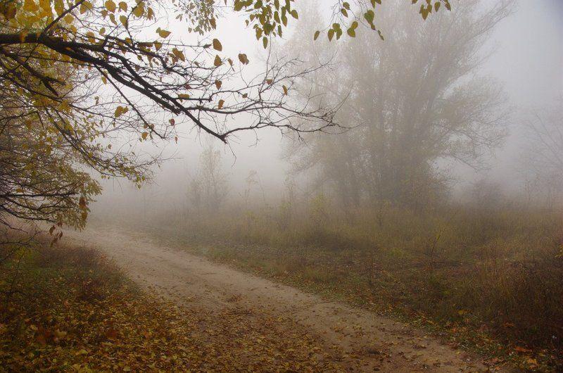 туман, утро, лес туманное утро на Хортицеphoto preview