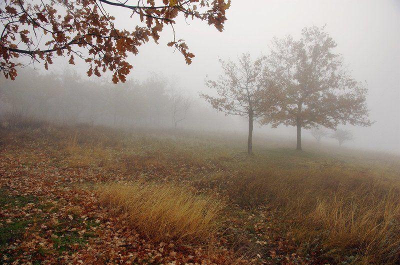 утро, туман туманное утро на Хортицеphoto preview