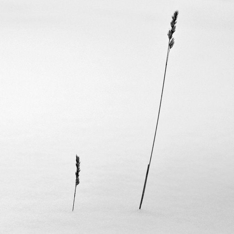 зима, мороз, туман Невесомостьphoto preview