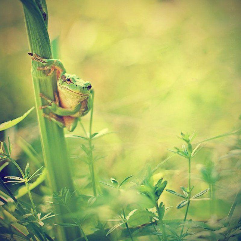 жаба ...photo preview