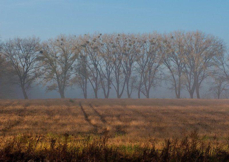 туман, деревья, осень Туманный день..photo preview