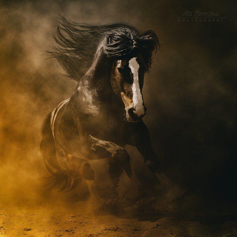 horse, лошадь, пыль Агат - Владимирский тяжеловозphoto preview