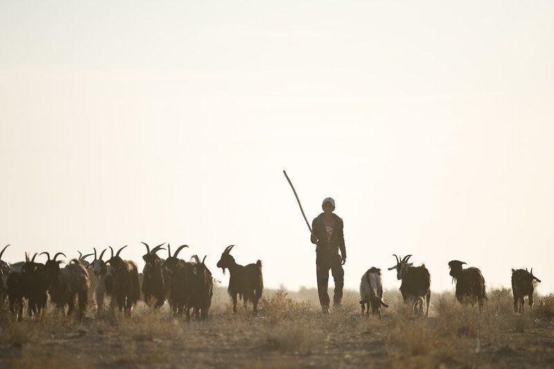 узбекистан, путешествие, пустыня, пастух, чабан, travel, uzbekistan, street, desert, ussr Истамphoto preview