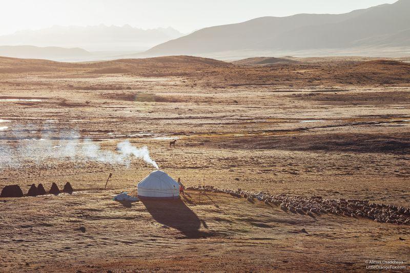 пейзаж, плато, рассвет, кыргызстан, юрта, степь, горы, тянь-шань Утро на Арабелеphoto preview