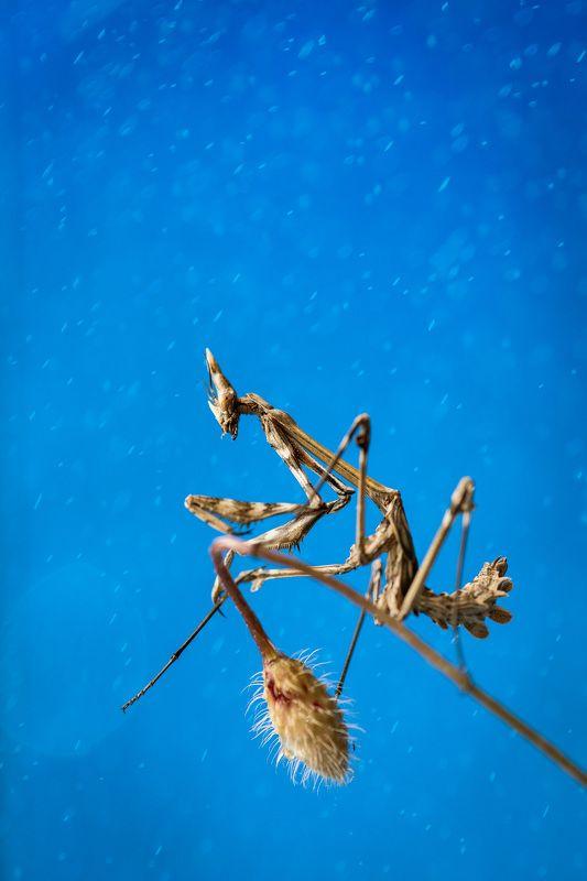 mantis, sky, rain Mantisphoto preview