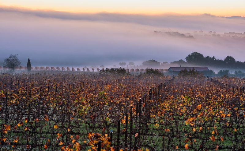 Виноградное настроениеphoto preview
