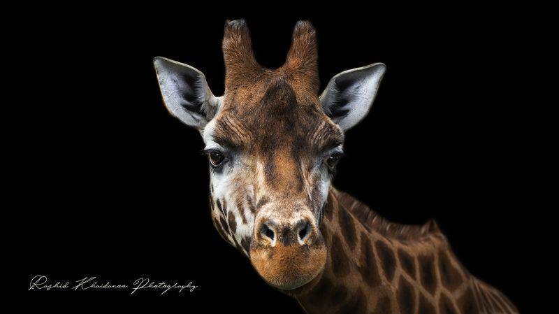 Жираф!photo preview
