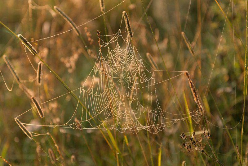 август, природа, россия, паутина, утро, рассвет, лето, туман, угра, река, nikon, путешествие, смоленская область, Ловись муха большая и маленькая)photo preview