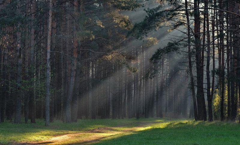 туман,дымка,солнце,минск утро под Минскомphoto preview