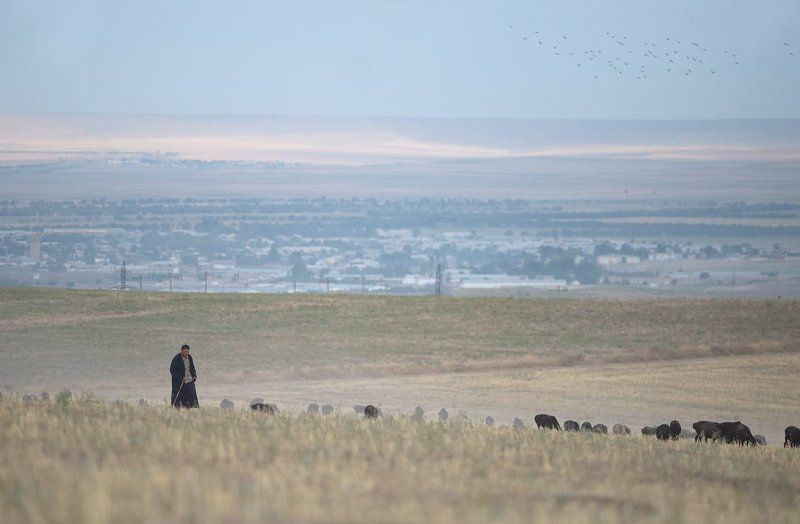 узбекистан, путешествие, пустыня, пастух, чабан, travel, uzbekistan, street, desert, ussr, город, city Параллельные миры photo preview