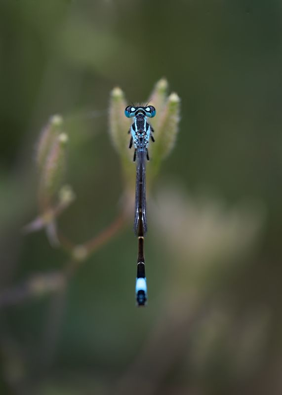 dragonfly, macro, close up Dragonfly from behindphoto preview