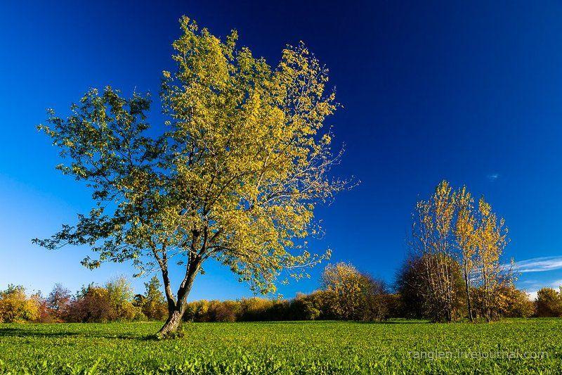 коломенское, москва, осень, золотая, небо, пейзаж Осень и небоphoto preview