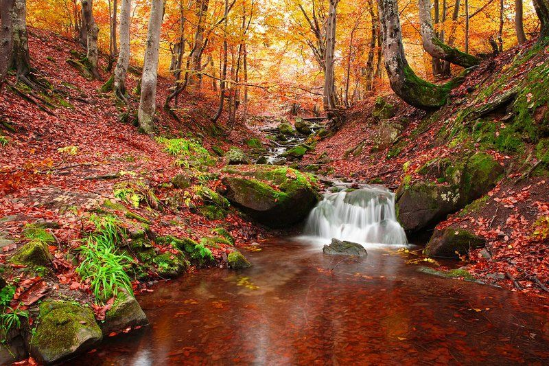 Осінь в Карпатахphoto preview