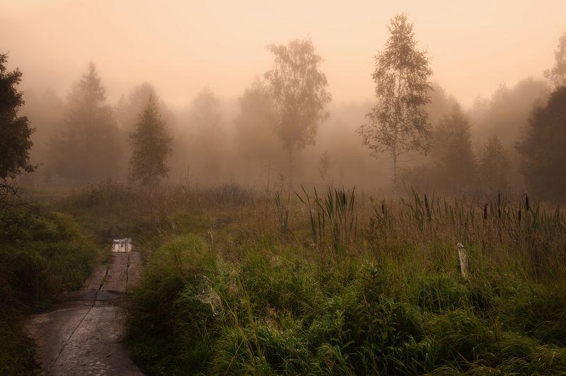 утро, рассвет, природа, пейзаж, туман, осень Ранним утромphoto preview