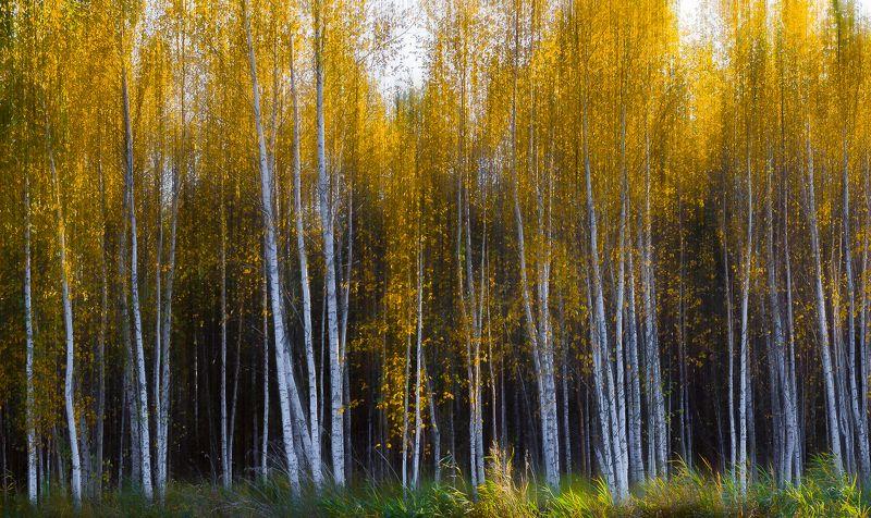 Осенний Урал*photo preview