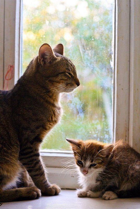 осень, котенок, кошка, кот, илья, шалафаев, shalapai-art, ожидание в ожиданиеphoto preview