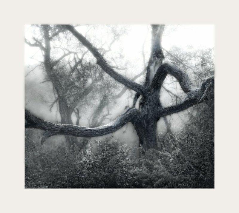 дерево, туман ......photo preview