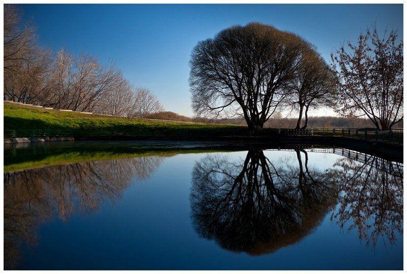 Дерево у прудаphoto preview