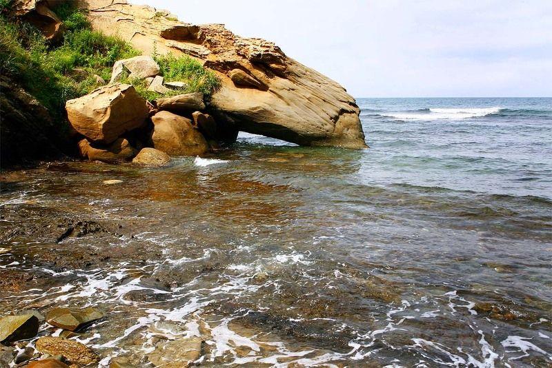 природа водопойphoto preview