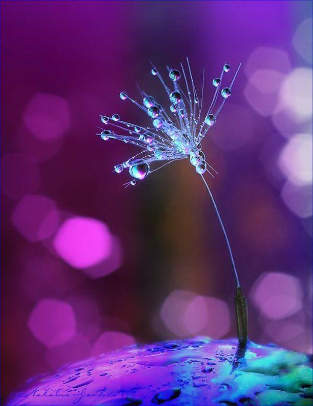 drop, water, air, капля, вода, воздух, natalia, jeshoa art-macro D r e a m D a n c ephoto preview