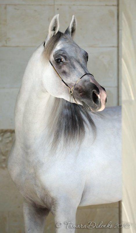 лошадь, мрамор ***photo preview