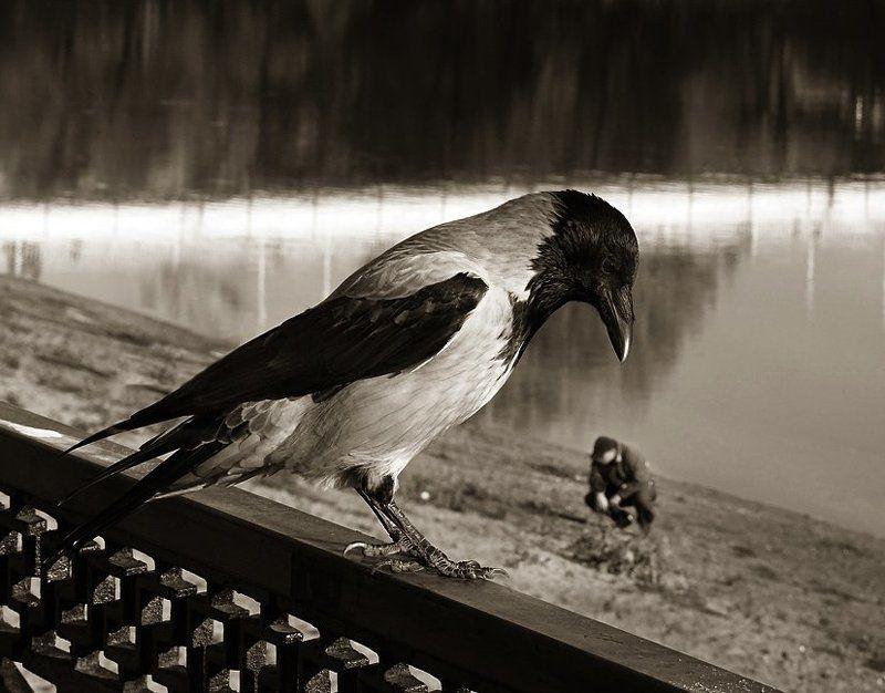 кто ты, птица?photo preview