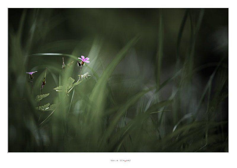 лето, цветок, природа ***photo preview