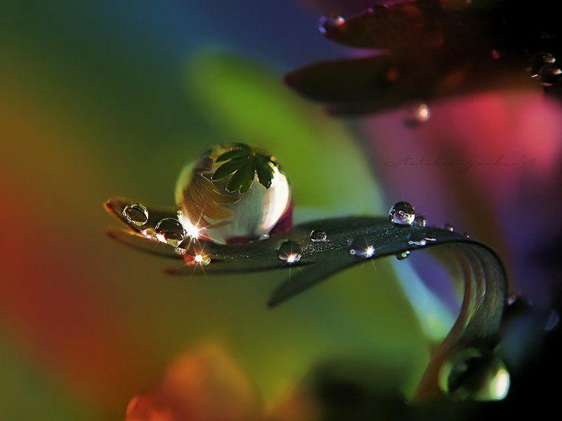drop, water, air, капля, вода, воздух, natalia, jeshoa art-macro Вселенная на ладониphoto preview