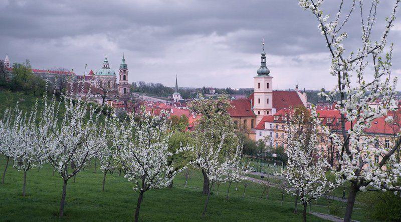 чехия,прага,весна,город,яблони Прага весенняя 2photo preview