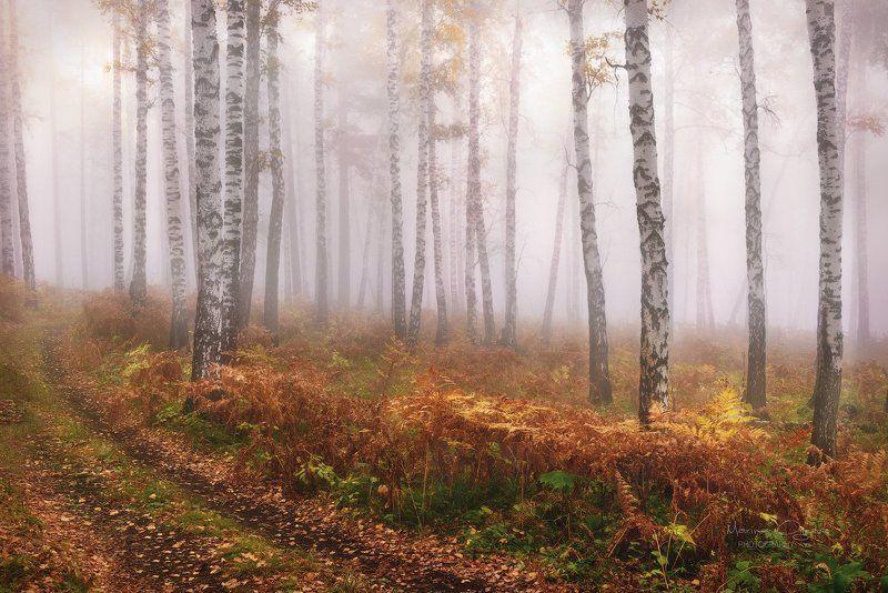 осень, лес, туман, березы, папоротник Улыбка осениphoto preview