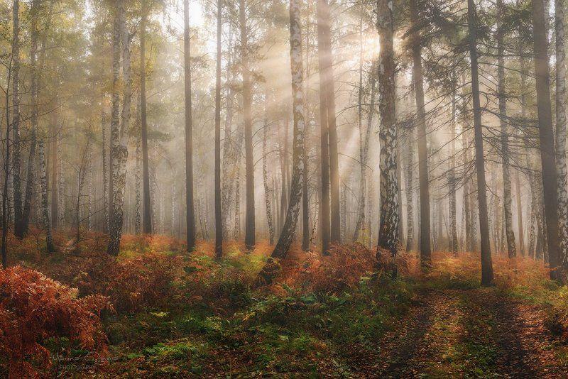 осень, лес, туман, рассвет Осенний лесphoto preview