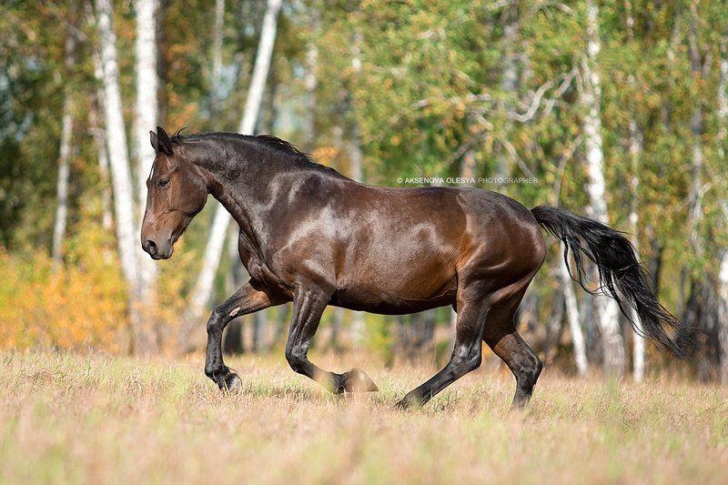 лошадь. животные. красота Красотка Валютаphoto preview