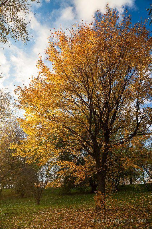 коломенское, москва, осень, золотая, небо, пейзаж Паркphoto preview
